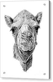 Arabian Beauty Acrylic Print