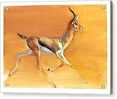 Arabian Gazelle Acrylic Print