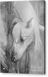 Arabian Gentleness Acrylic Print by Silvana Gabudean Dobre