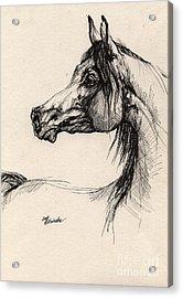 Arabian Horse Drawing 26 Acrylic Print by Angel  Tarantella
