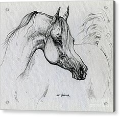 Arabian Horse Drawing 28 Acrylic Print by Angel  Tarantella