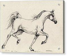 Arabian Horse Drawing 31 Acrylic Print by Angel  Tarantella