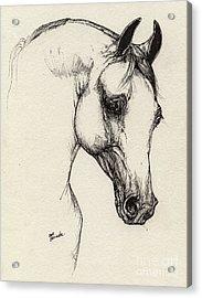 Arabian Horse Drawing 32 Acrylic Print by Angel  Tarantella