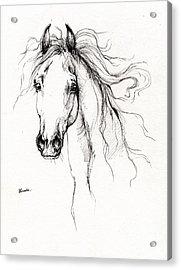 Arabian Horse Drawing 4 Acrylic Print by Angel  Tarantella