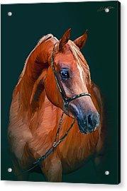 Arabian Horse Acrylic Print by Marina Likholat