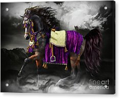 Arabian Horse  Shaitan Acrylic Print