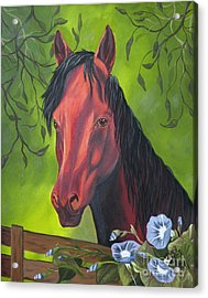Arabian Horse Acrylic Print by Terri Mills