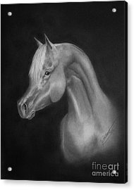 Arabian Night Acrylic Print by Lissa Rachelle