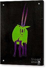Arabian Oryx Acrylic Print