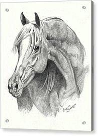 Arabian Stallion Acrylic Print by Suzanne Schaefer