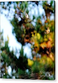 Arachnid Art Acrylic Print