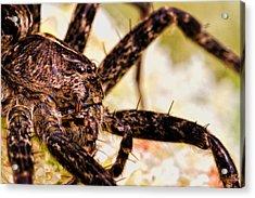 Arachnophobia Acrylic Print by Bob Orsillo