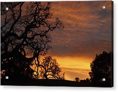 Acrylic Print featuring the photograph Arastradero Open Space Preserve Sunset by Priya Ghose