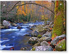Arboreal Arch Over Big Creek Acrylic Print by Alan Lenk