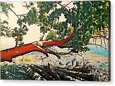 Arbutus Over Beach Acrylic Print