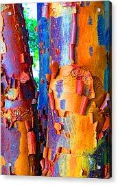 Arbutus Tree Summer Acrylic Print by Laurie Tsemak