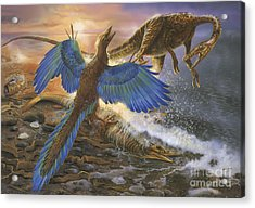 Archaeopteryx Defending Its Prey Acrylic Print