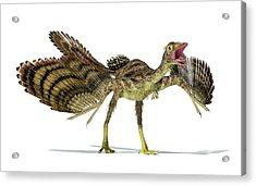 Archaeopteryx Dinosaur Acrylic Print by Leonello Calvetti