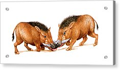 Archaeotherium Prehistoric Mammals Acrylic Print