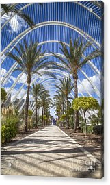 Arche With Palmtrees Acrylic Print