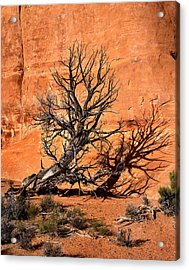 Arches Tree Acrylic Print