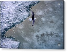 Arctic Flight Acrylic Print
