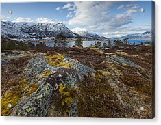 Arctic Lichen Acrylic Print
