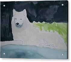 Arctic Wolf Watercolor On Paper Acrylic Print by William Sahir House