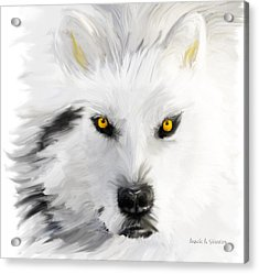 Arctic Wolf With Yellow Eyes Acrylic Print by Angela A Stanton