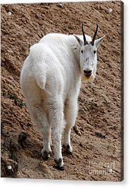 Are You Following Me Acrylic Print by Vivian Christopher