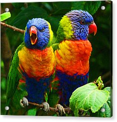 Are You Listening - Rainbow Lorikeets Acrylic Print by Margaret Saheed
