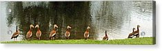 Are You Sure They Look Like Us? Acrylic Print by Jim Hubbard