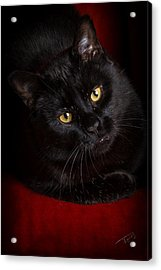 Aren't I Too Beautiful To Behold Acrylic Print by Tom Buchanan