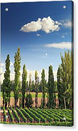 Argentina, Mendoza, Wineries Acrylic Print by Michele Falzone