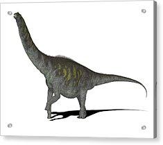 Argentinosaurus Dinosaur Acrylic Print by Friedrich Saurer
