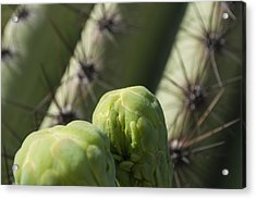 Arizona Bud Details Acrylic Print