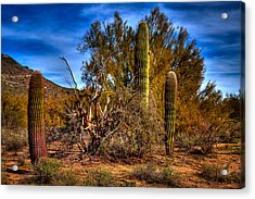 Arizona Landscape II Acrylic Print by David Patterson