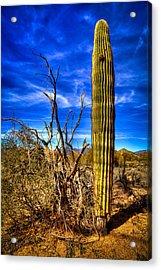 Arizona Landscape IIi Acrylic Print by David Patterson