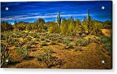 Arizona Landscape Iv Acrylic Print by David Patterson