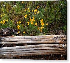 Arizona Poppy Acrylic Print