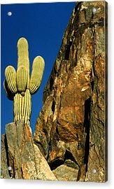 Arizona Sagauro Cactus Acrylic Print