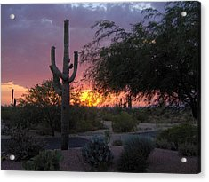 Arizona Sunset Acrylic Print by Catherine Swerediuk