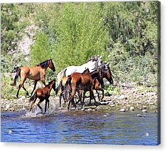 Arizona Wild Horse Family Acrylic Print