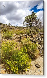 Arizona Wildflowers And Joshua Trees Acrylic Print by Willie Harper