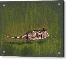 Armadillo Run Acrylic Print
