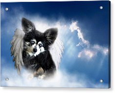 Armani Angel Acrylic Print