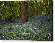 Around A Tree Acrylic Print by Svetlana Sewell