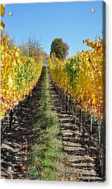 Around And About In My Neck Of The Woods Series 25 Acrylic Print