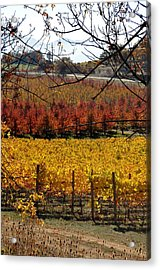 Around And About In My Neck Of The Woods Series 28 Acrylic Print
