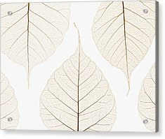 Arranged Leaves Acrylic Print by Kelly Redinger